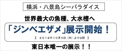 八景島シーパラダイス ジンベエザメ展示