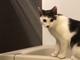 「濡れるの平気なの?!」 サンシャイン池崎の愛猫「風神」、水遊びする動画に驚きの声