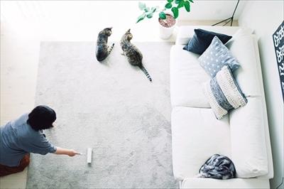 猫がよろこぶ掃除・片づけ