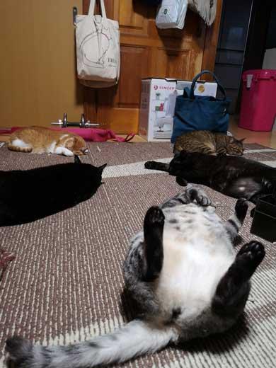 ホットカーペット つけてあげた 猫 天国