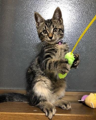 子猫 成長 早い サイダー ペットボトル 比較 2週間