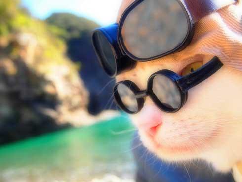 ジブリ 猫 コスプレ 紅の豚 もののけ姫 徳島 観光地
