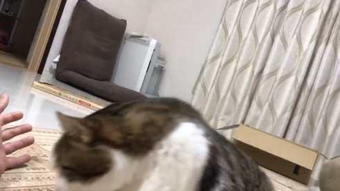 手 ワキワキ 倒れてくる 猫 ナデナデ