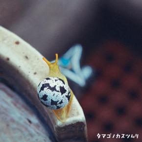 カスツムリ08