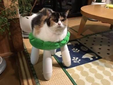 guremike 猫型ロボット