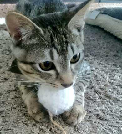 猫 お風呂 平気 嫌がらない 入浴シーン
