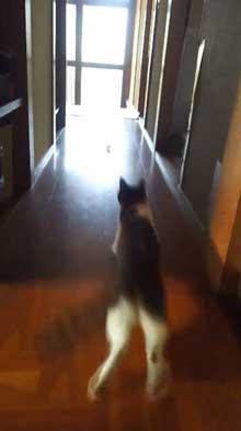 犯人確保 猫 シンク 首 突っ込む 排水口