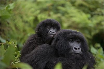 IUCNレッドリスト