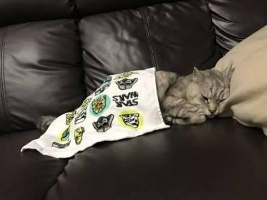 猫パン職人