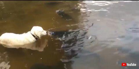 ワンちゃんとお魚さん