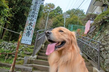こー君 大山阿夫利神社