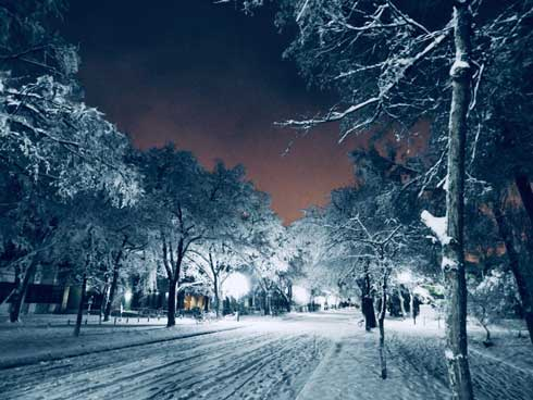 北海道大学 札幌キャンパス 雪景色 北大 幻想的