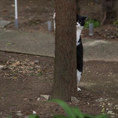 残念すぎるネコ写真展