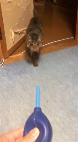 猫の空くん