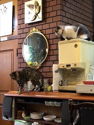 隣の席が猫ちゃん