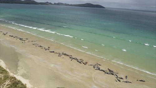ニュージーランド クジラ座礁