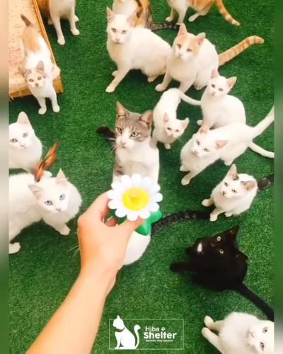 おもちゃと猫ちゃんたち