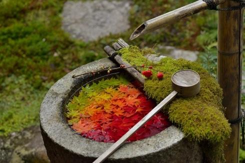 楊谷寺 手水鉢 グラデーション紅葉