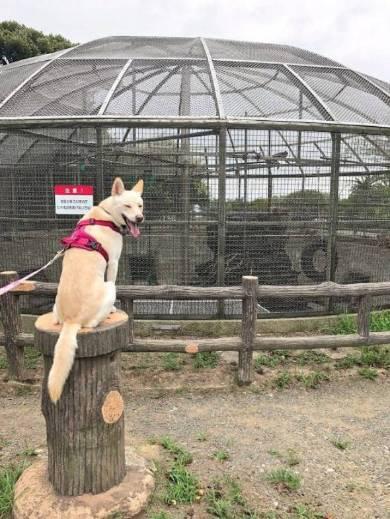 カッパが怖い犬