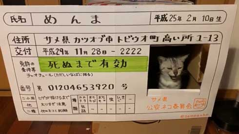 猫 免許証 ダンボール なめ猫
