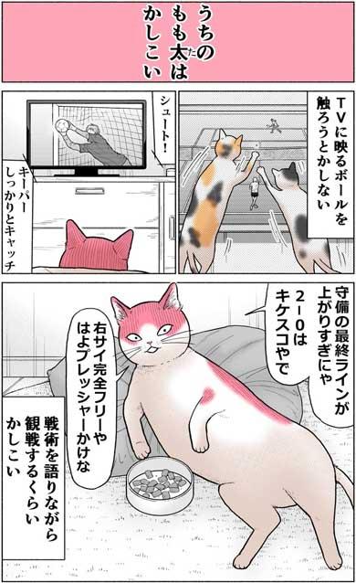 かしこい 猫 もも太 ギャル 漫画 中田あも Twitter 関西弁