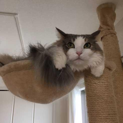 テレビ 乗る 猫 ガルマ 嫌がる