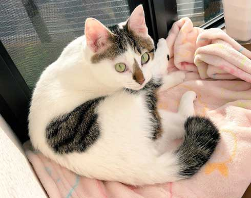 猫 PS4 暖かい場所 認識 あるある ゲーム機 暖房