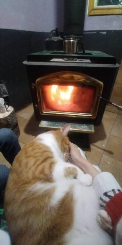 不可解な寝相の猫