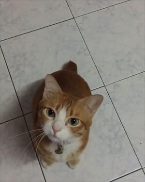 草を食べる猫ちゃん