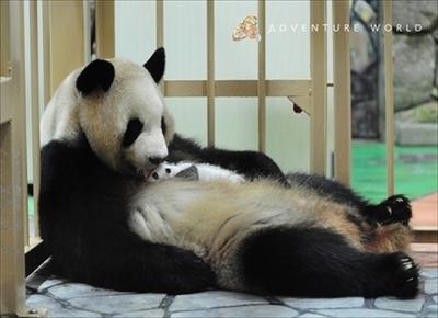 アドベンチャーワールド パンダ