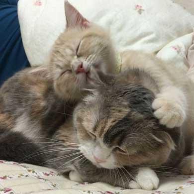猫 爪切り おとなしい モフモフ モフ ココ フミフミ