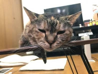 ストーブ かしこい猫