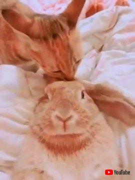 ニャンコとウサギ