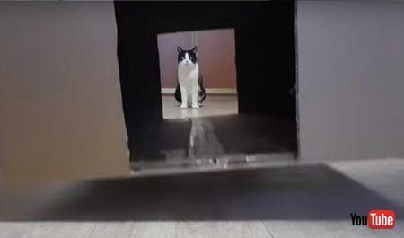 迷路の穴から見える猫ちゃん
