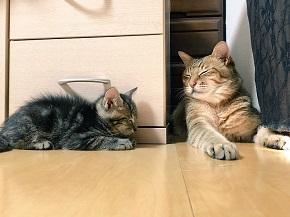 ハマジさん 大吉 イサム 猫