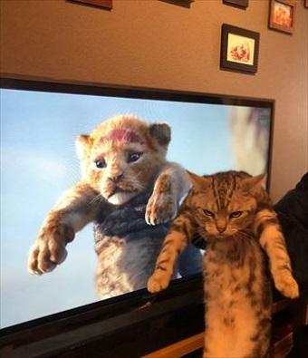 ライオンキング猫