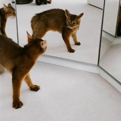 三面鏡vs猫ちゃん