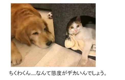 坂上忍 坂本ちくわ 猫 保護猫 保護犬 ペット 家族