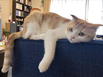 玄関で出迎える猫さん