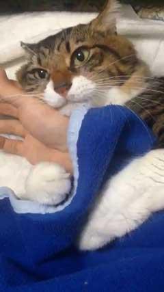 猫 ヤマダ かわいい ハグ 腕 抱きつく 甘える 暖を取る カネキリカ