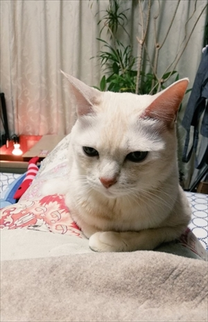 エサをねだる猫ちゃん