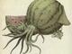 """司書メイドの同人誌レビューノート:スルメとスイカで""""スルメスイカ"""" 同人誌『キ生物図鑑』に描かれた動物と植物の融合が奇妙でぞわぞわ"""