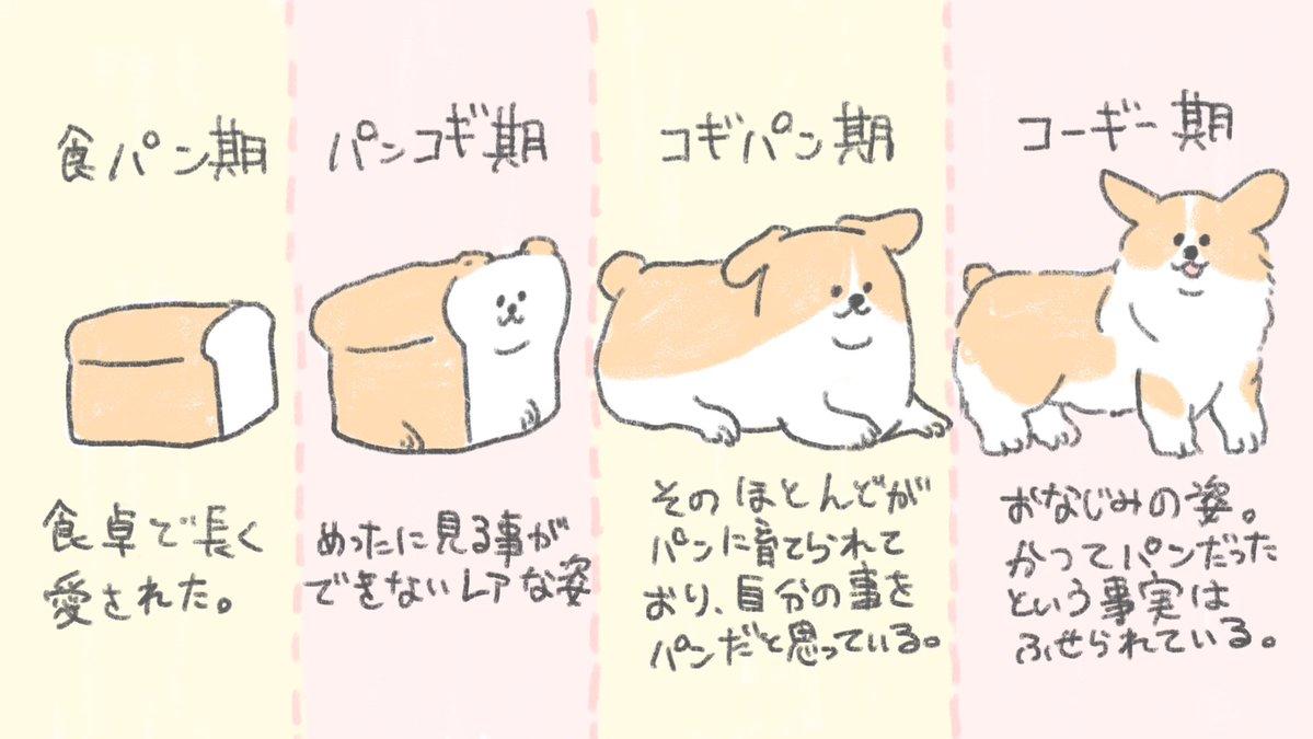 食パンは進化をたどってコーギーになった!? かわいいイラストに「そうだったのか!」「前から思ってた」の声 , ねとらぼ