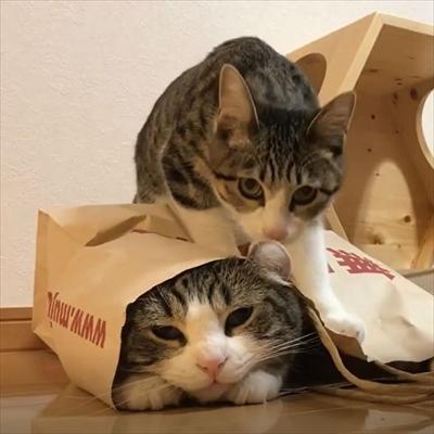 イチゴを食べる猫ちゃん