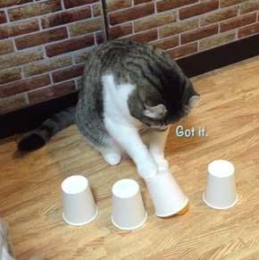 猫 コップ当てゲーム ピンポン球 当てる スノー