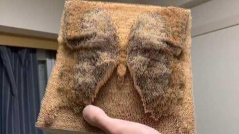 爪楊枝 1万本 蝶 モルフォ蝶 羽の色 変わる