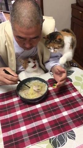 那須 長楽寺 猫 住職