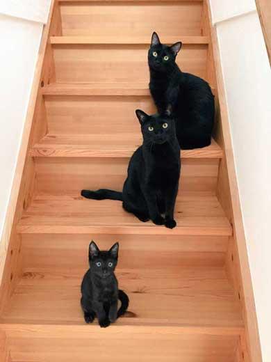 無機質な感じ 黒猫 目 人形 無 表情 視線 魔女の宅急便 ジジ