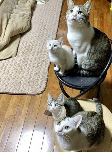 子猫 赤ちゃん猫 世話 ちっちゃいお母さん 子猫ママ 保護