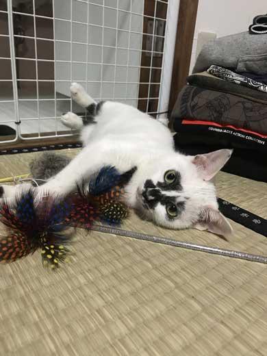 河鍋暁斎 猫 ポーズ 鳥獣戯画 猫又と狸 熱海 バー Muddy Cat